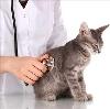 Ветеринарные клиники в Калмыково
